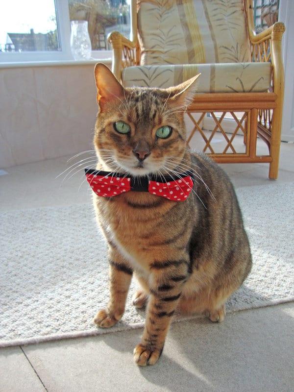 Corbata Para Gato